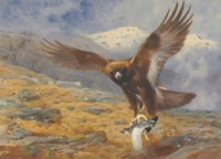 'The eagle's stoop': a golden eagle snatching a ptarmigan